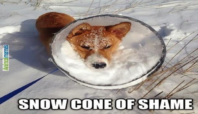 a funny list of dogs and cats in the cone of shame