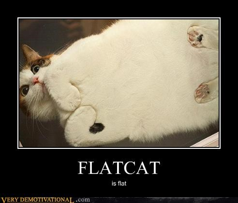 Caturday cute flat flat cat kitteh scanner - 4158096896