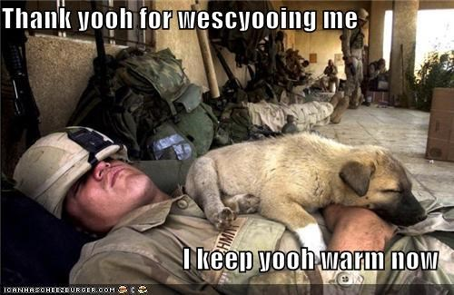 animals dogs funny lolz military soldier - 4158680320