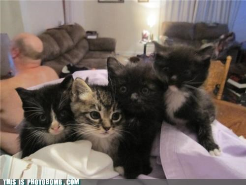 animals cute Impending Doom kittehs photobomb