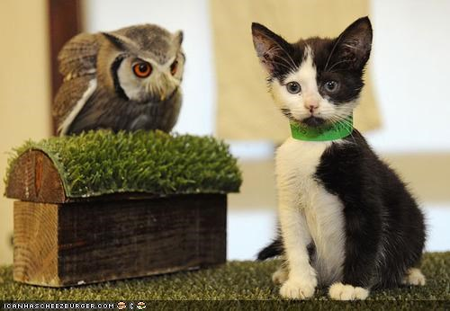 cute friends Interspecies Love lolowls news owls - 4159288320