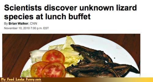 buffet discover lizard meals news science scientists species