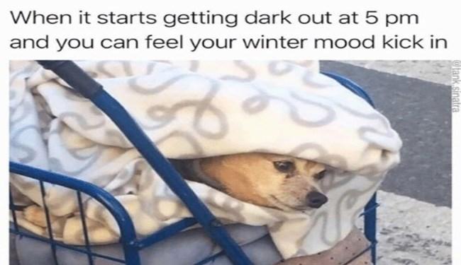 dogs Memes mondays - 4160261