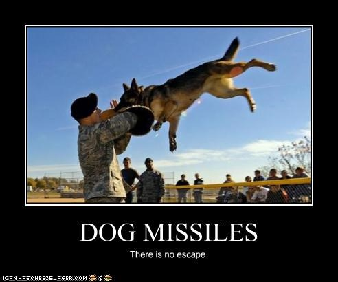 animal demotivational dogs funny lolz soldier - 4160386048