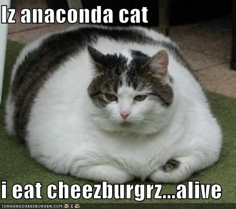 Cheezburger Image 4160453120