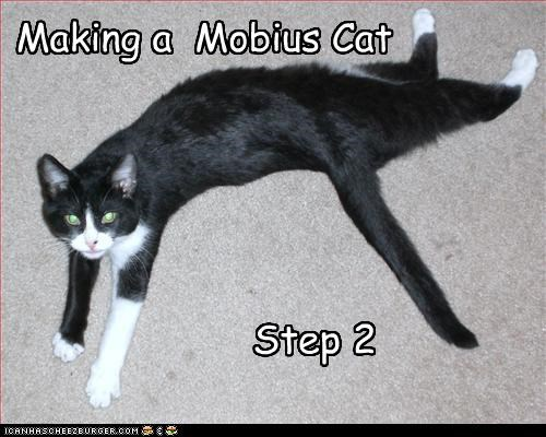 Step 2 Making a Mobius Cat