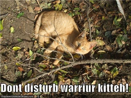Dont disturb warriur kitteh!