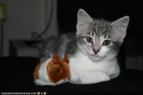 cyoot kitteh of teh day,friends,hamster,stuffed animals