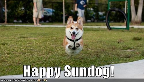 corgi,excited,flying,Hall of Fame,happy,happy sundog,hover dog,jumping,Sundog