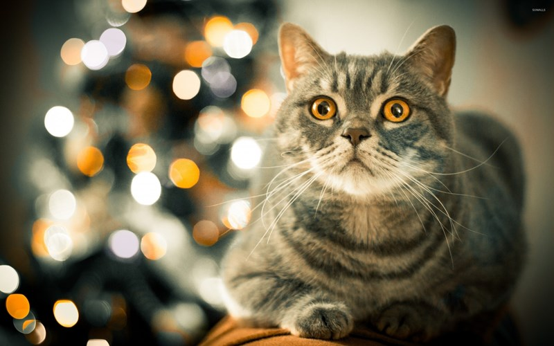 tips to protect your cat from christmAS tree