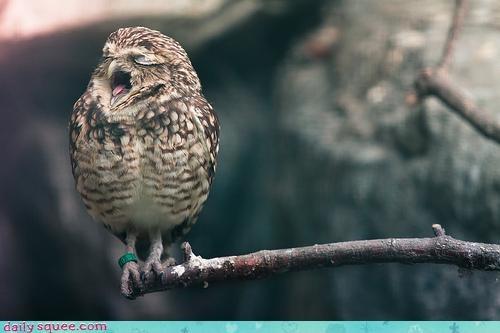 acting like animals annoying asking begging distracting hoot loud Music shut up singing - 4161492992