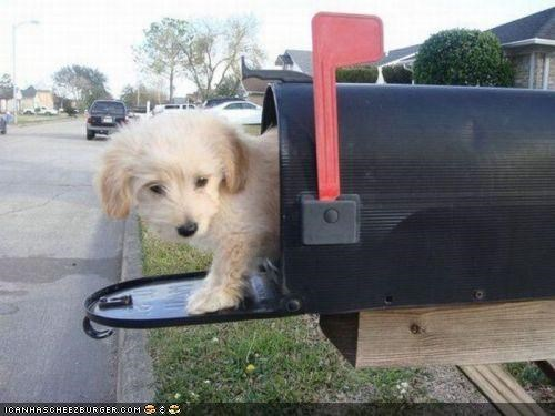 cute cyoot puppeh ob teh day mail mailbox puppy tiny whatbreed - 4161523200