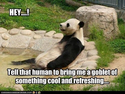 Cheezburger Image 4161648896