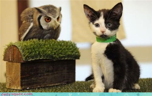 cute,kitten,Owl