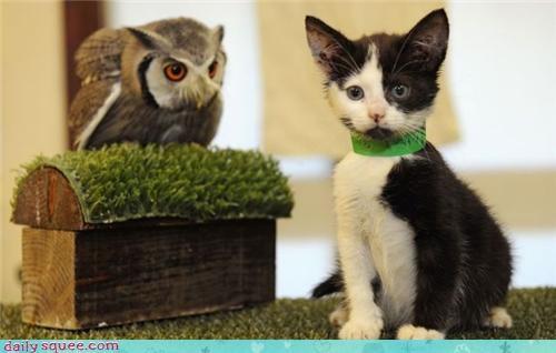 cute kitten Owl - 4161916416