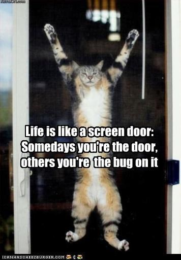 adage,bug,caption,captioned,cat,comparison,door,life,screen door,squished,two sides