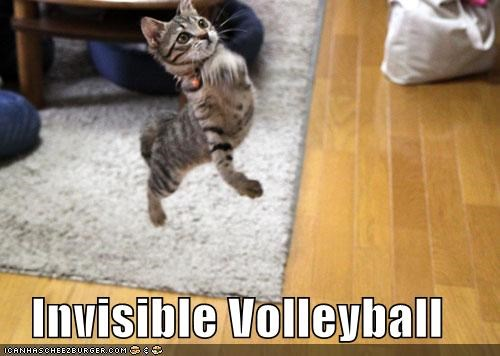 caption captioned cat invisible serve spike volleyball - 4162049024
