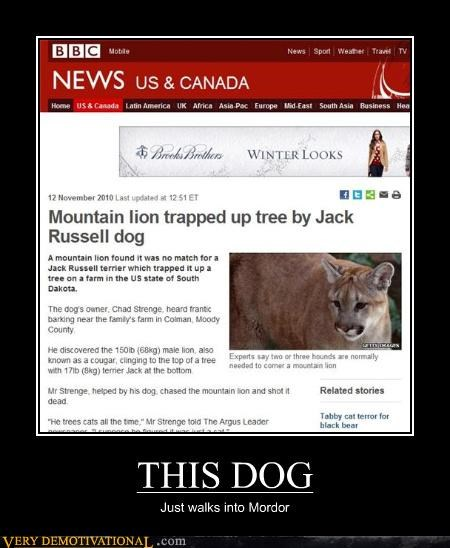 bad ass,bbc,dogs,jack russell terrier,mordor,mountain lion,news