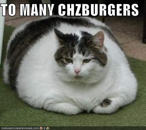 Cheezburger Image 4162308608