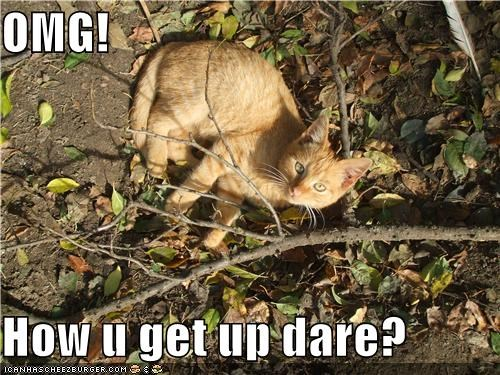 OMG!  How u get up dare?