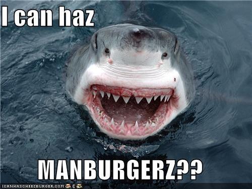 Cheezburger Image 4163125248