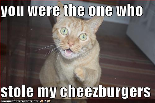 Cheezburger Image 4163458816