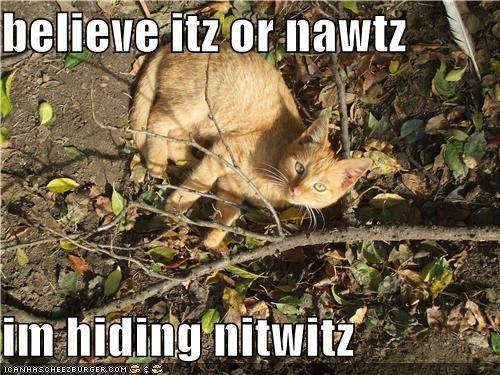 believe itz or nawtz   im hiding nitwitz