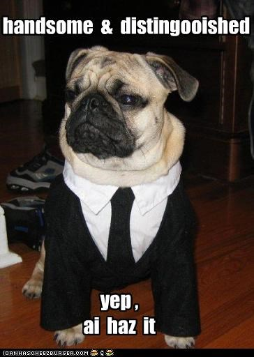 clothes costume distinguished dressed up Hall of Fame handsome i has pug suit - 4163748864