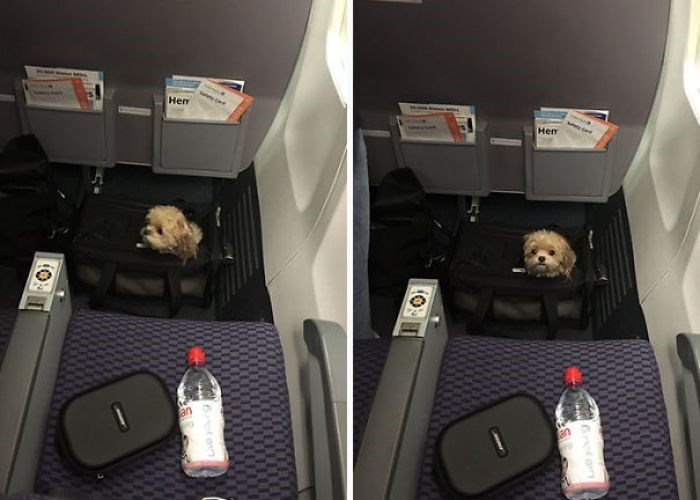 animals on flights