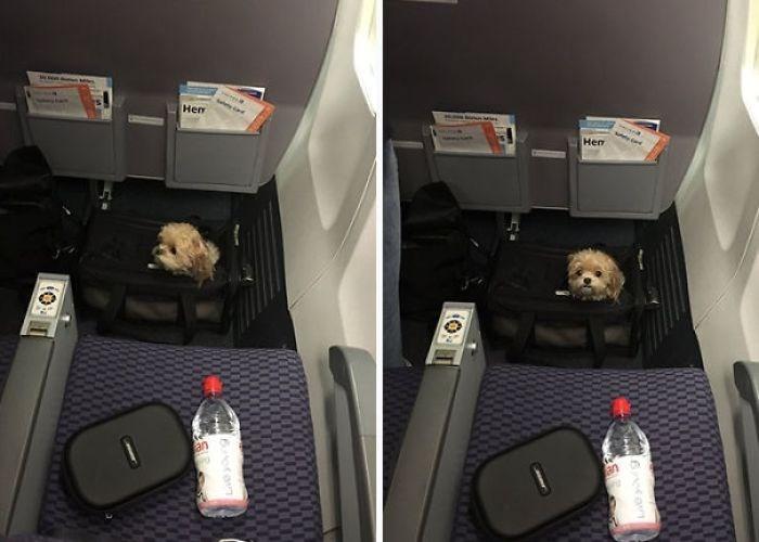 animals on flights