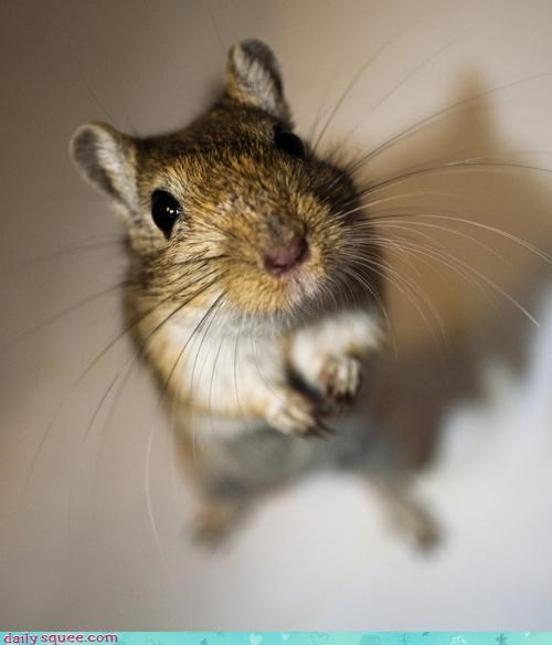 gerbil photography user pet - 4165556480