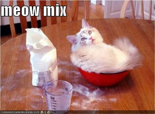 bowl caption captioned cat flour literalism meow meow mix mix white - 4165801472