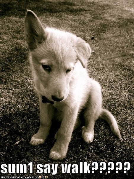 cute,ear,hearing,puppy,question,say,someone,walk,whatbreed,word