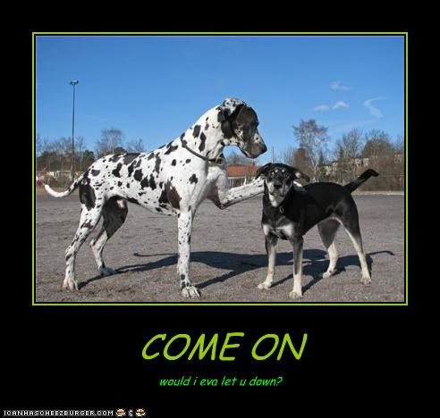 Cheezburger Image 4165984256