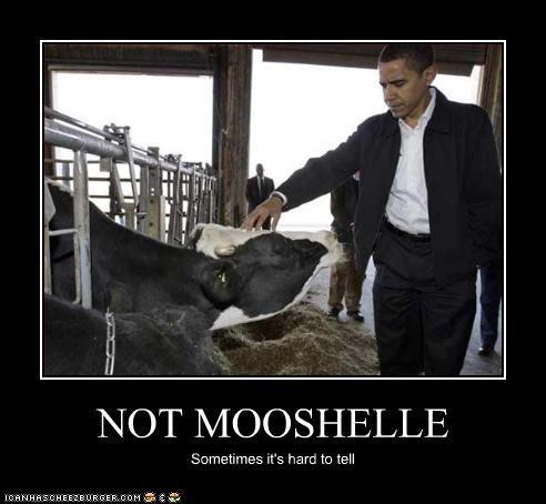 NOT MOOSHELLE Sometimes it's hard to tell