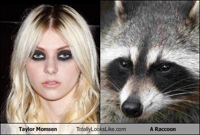 animals,gross,raccoon,singer,taylor momsen