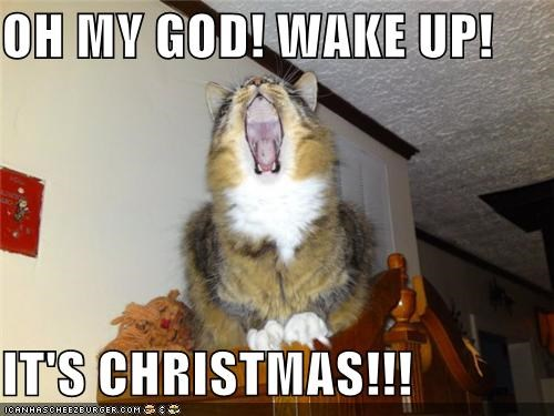 caption captioned cat christmas excited meowy christmas merry christmas oh my god wake up yelling