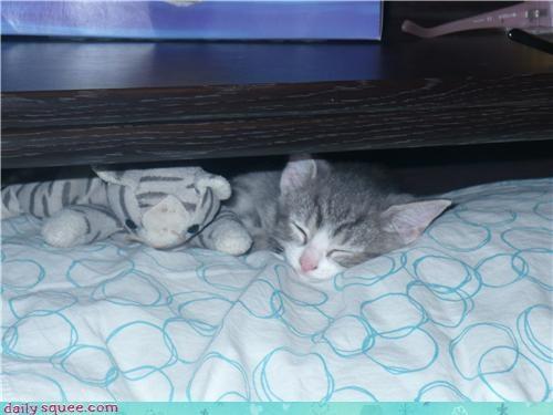 clone cute kitten lookalike - 4166959616