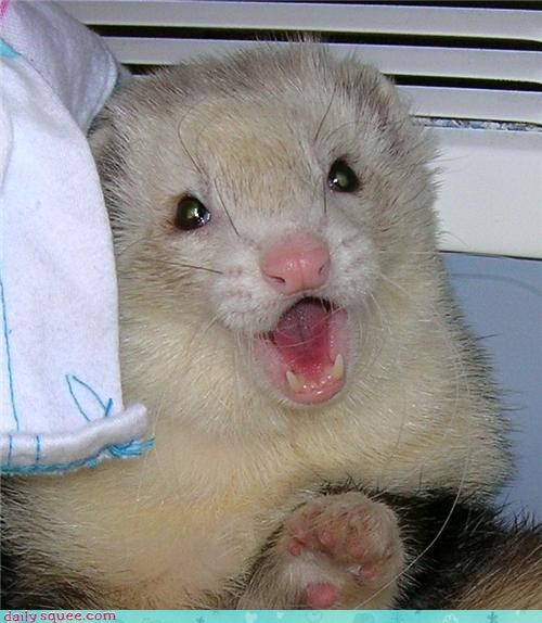 cute face ferret - 4167098112