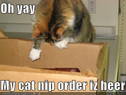 Oh Yay My Cat Nip Order Iz Heer Cheezburger Funny Memes Funny Pictures Meme generator, instant notifications, image/video download, achievements and many more! cheezburger