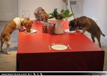 clientele dogs food interesting London new organic restaurant unusual - 4169214976
