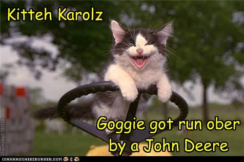 Kitteh Karolz Goggie got run ober by a John Deere Chech1965 151110