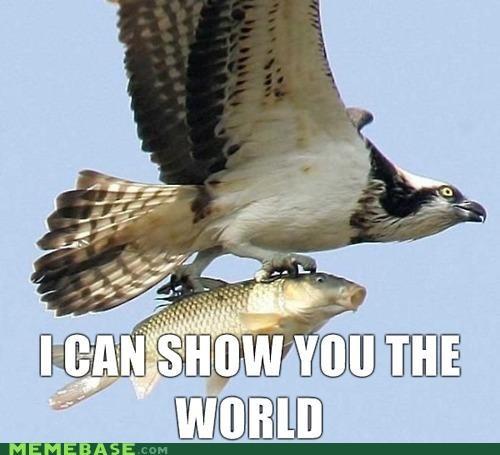 a whole new world animemes disney eagle fish Memes - 4169656832