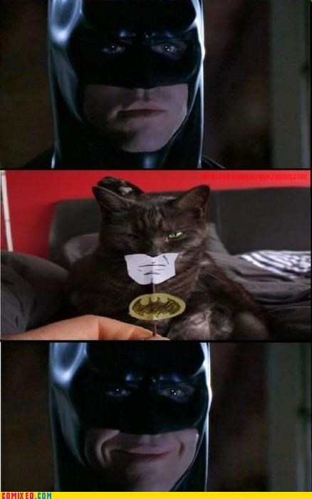 animals,bat cat,batman,cat,lol