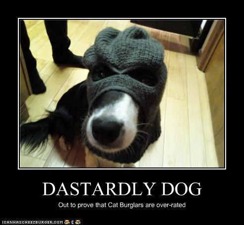 border collie,burglar,cat,Cat Burglar,dastardly,dogs,mask,mission,overrated,proof