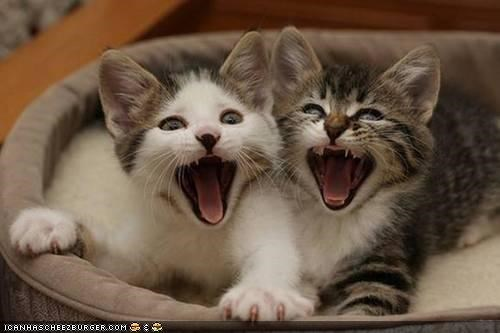cyoot kitteh of teh day,meowing,scared,screaming,two cats,yawning,yelling