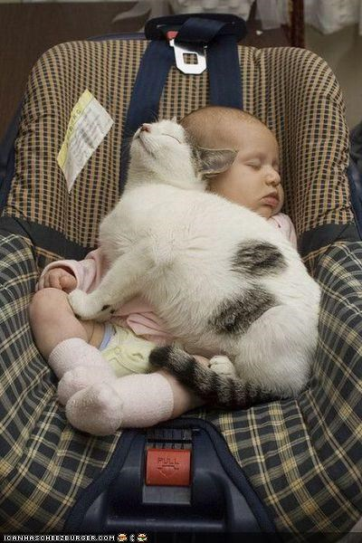 baby blanket car seat cyoot kitteh of teh day sleeping - 4169908992
