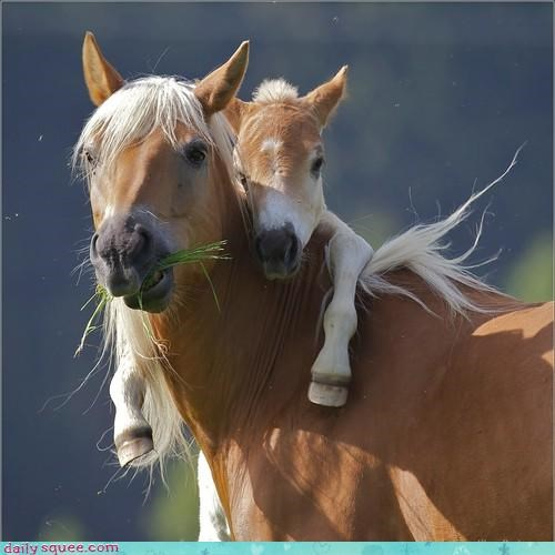 acting like animals baby cuddling cute horse love mare mom sweet - 4170027008
