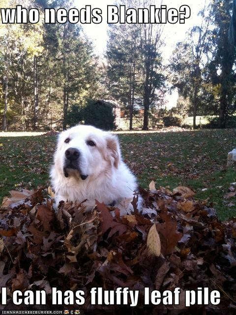 blanket,Fluffy,golden retriever,i can has,leaf pile,leaves,pile,replacement,who needs it