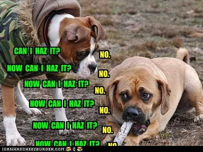 asking,boxer,can-i-has-it,Hall of Fame,mastiff,mine,no,ownership,possession,repetition